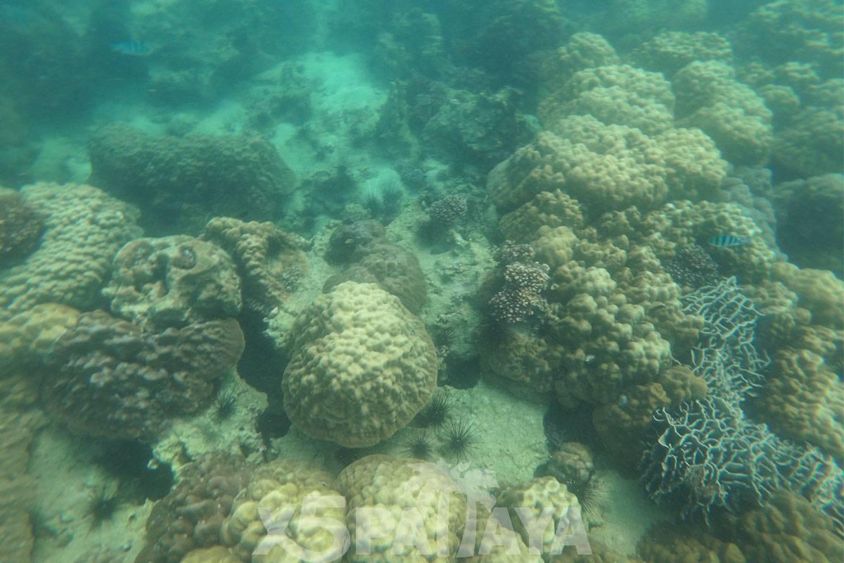 фото кораллов под водой
