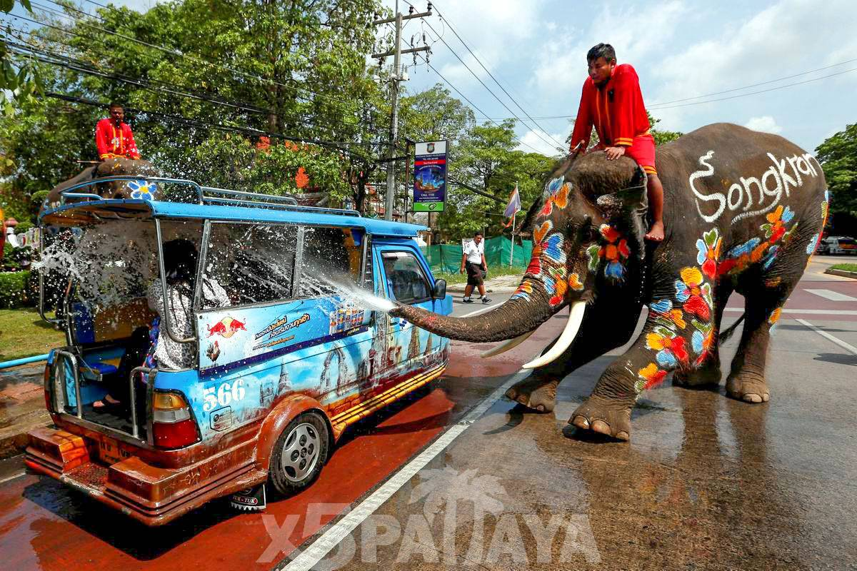 фото слон обливает авто