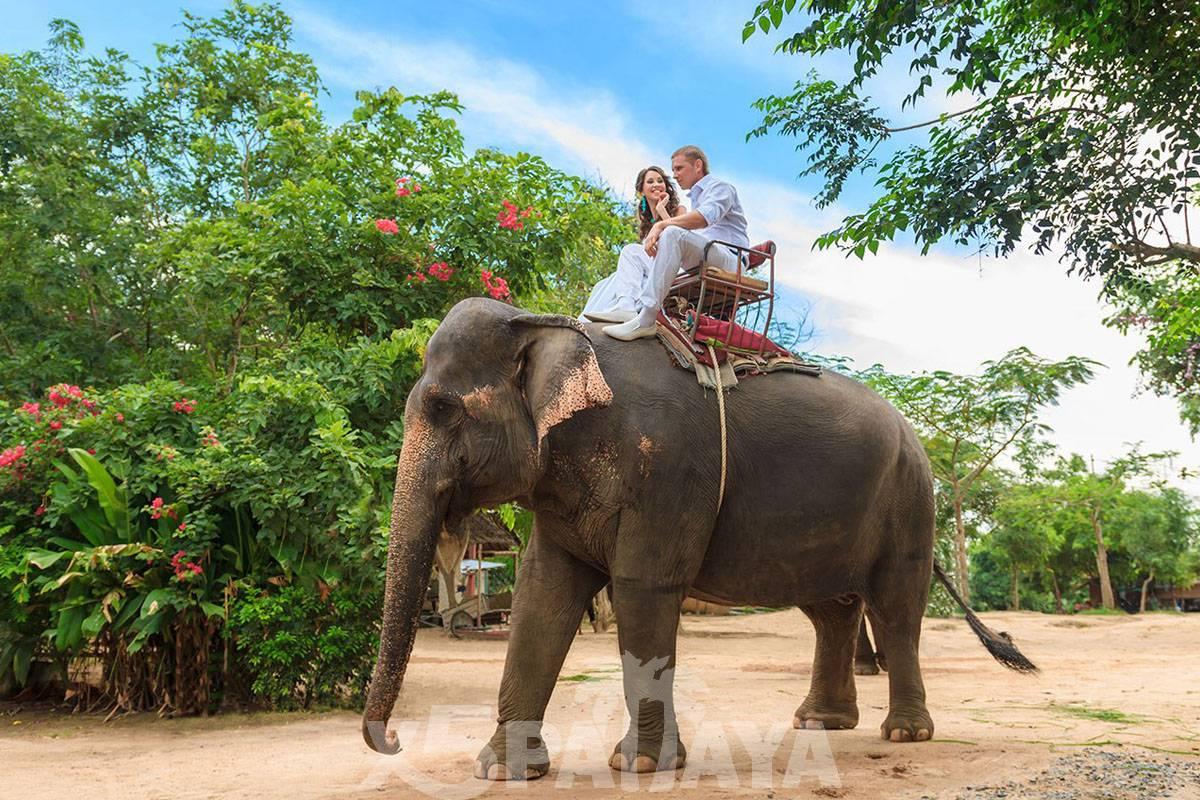 фото людей на слоне