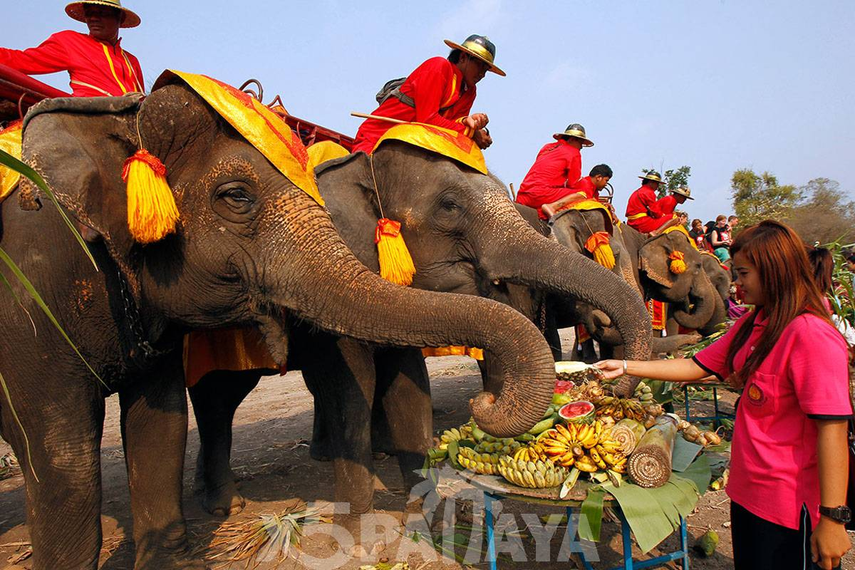 фото слонов