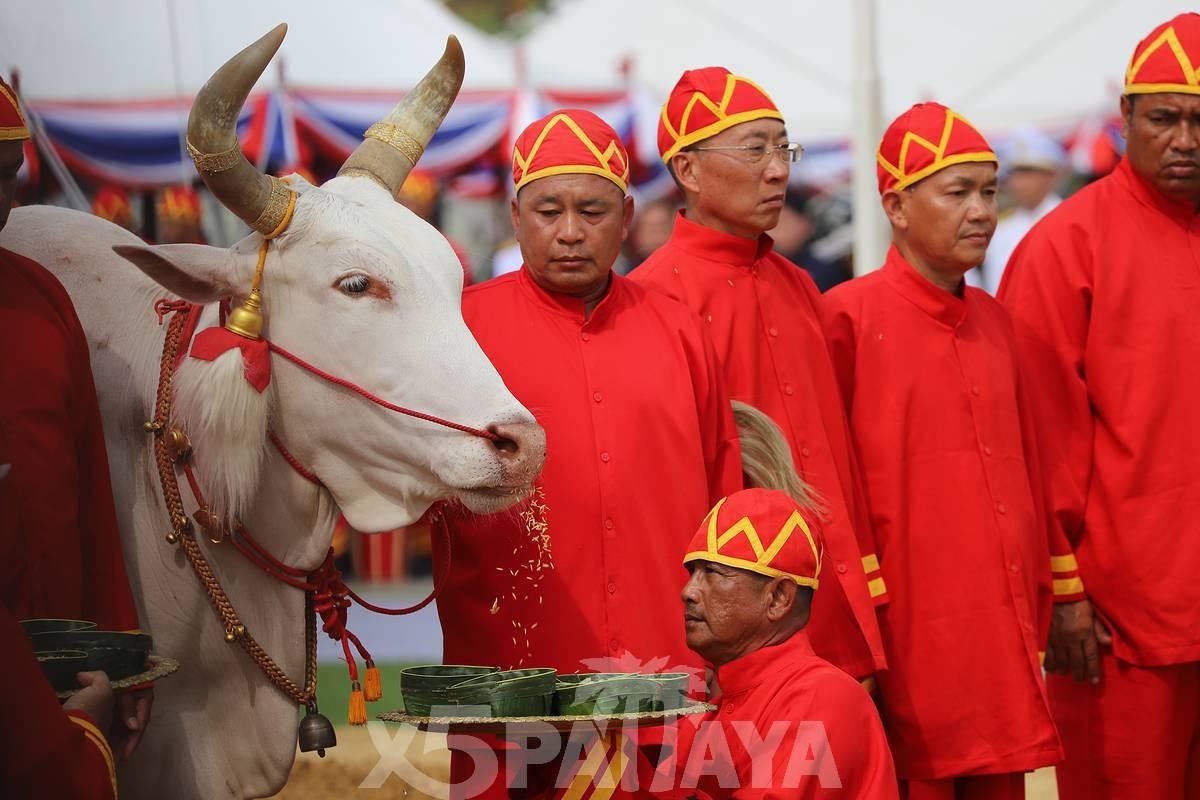 фото людей с коровой